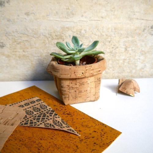 Succulente et son cache pot végétal